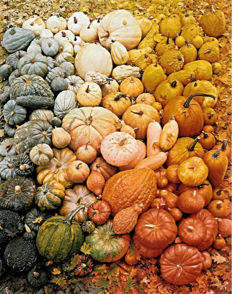 ombre-pumpkins